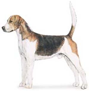The Symmetry of the Foxhound is of the greatest importance