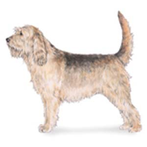 The Otterhound is a large, rough-coated hound